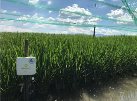 「アグリビジネス創出フェア2017」への<br>農業IoTソリューション「e-kakashi」の出展について