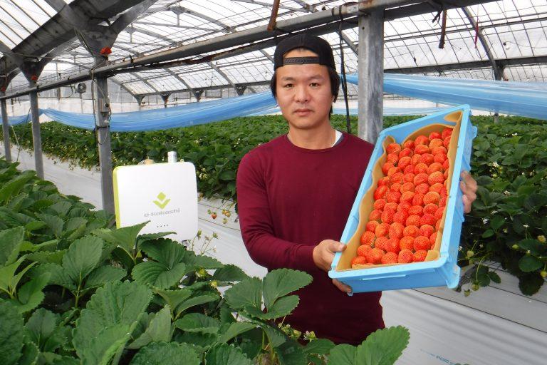 平成28年度総務省「ICTまち・ひと・しごと創生推進事業」で<br> 福岡県宗像市「むなかた園芸農業ICT技術普及促進事業」と<br>「e-kakashi」が連携
